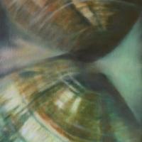 Vongole veraci, olio su tela cm 35x50