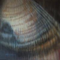 Vongola verace, olio su tela cm 40x40